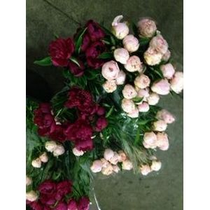 It's Peony Season! Great Prices NOW!