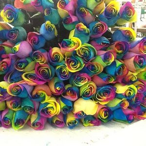 Rainbow Roses!! Just in!!