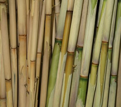 Bamboo (dried)