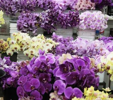 Choice america flower wholesale the los angeles flower market choice america flower wholesale mightylinksfo