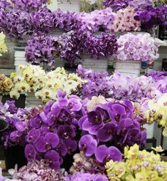Choice America Flower Wholesale