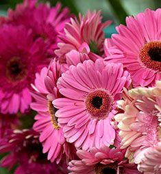 Gilbert Wholesale Flowers