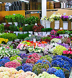 Gonzalez & Sons Wholesale Flowers