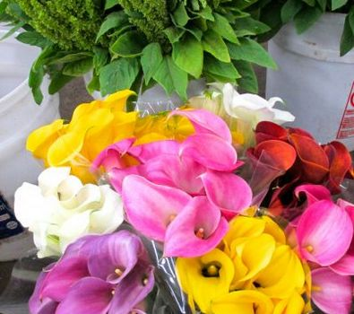 Imported Flowers from Paradise, Inc.