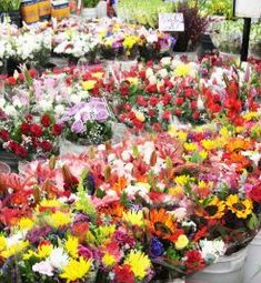 Julia's Wholesale Flowers
