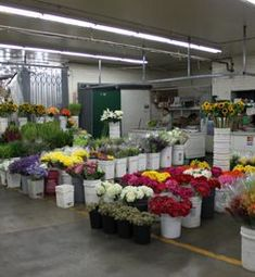 Paradise Garden Wholesale Flowers