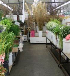 S.O.S. Wholesale Flower Market