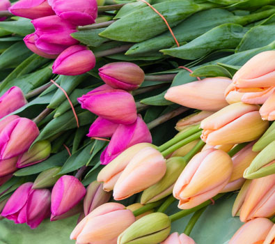 Specials! Tulips, Peonies & Cymbidium!