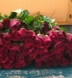 Valle Wholesale Flowers