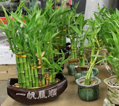 Bamboo Arrangements