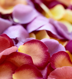 Rose Petals (assorted)
