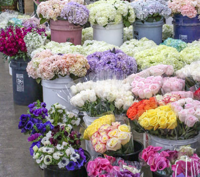 The Hydrangea and More
